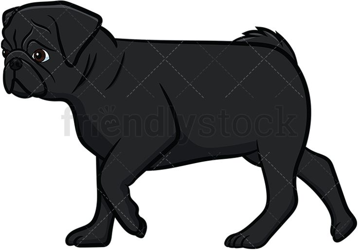 Black Pug Walking: Royalty-free stock vector illustration of a side view of a black pug dog with a curly tail and wrinkled face walking forward. #friendlystock #clipart #cartoon #vector #stockimage #art #pug #cute #mastiff #chinese #dutch #walking #black