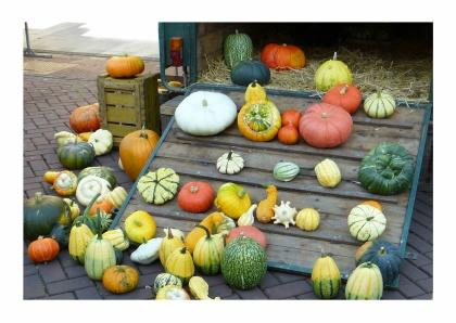 Pompoenen mix, mix of pumpkins. http://www.kaartje2go.nl/kaartencollecties/creagaat---herfst?sk_id=161