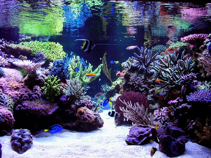 114 best images about saltwater fish tanks on pinterest for Aquarium nano marin