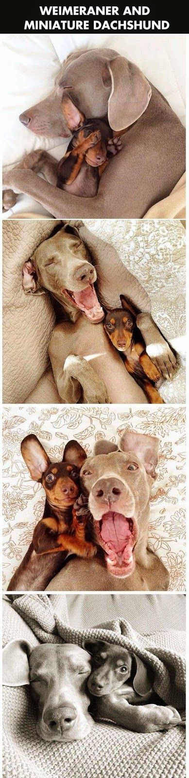 This makes me laugh 10 Fascinating Facts You Never Knew About Dogs