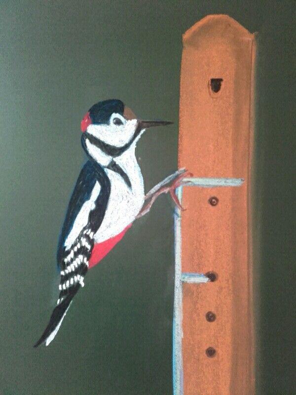1st grade chalkboard drawing, the woodpecker. Waldorf School Warsaw