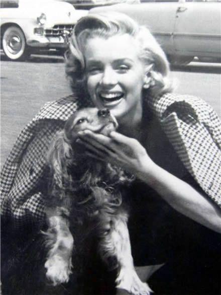 Marilyn Monroe with Cavalier King Charles Spaniel