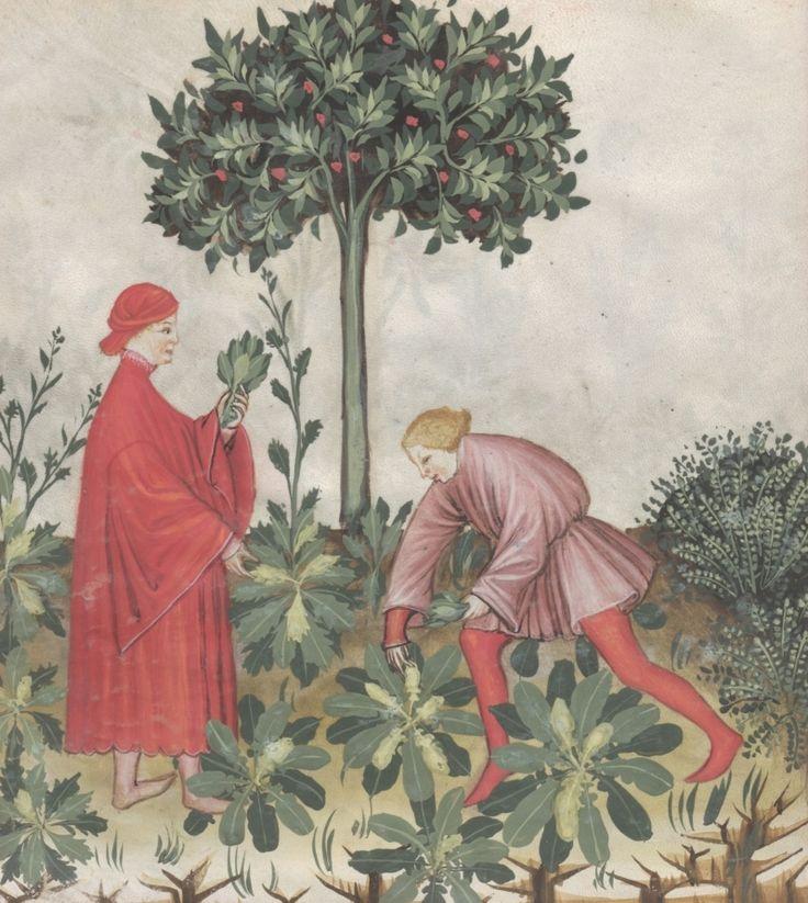 Two men picking cress - Eruca vel nasturtium | Österreichische Nationalbibliothek - Austrian National Library | Public Domain