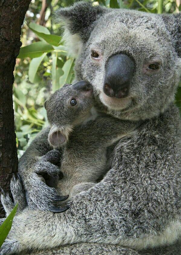 Mama will always love and protect her baby. ....