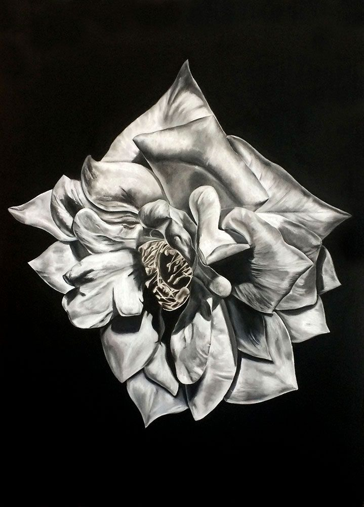 Kendall-Leigh Nash - Flower Series II | Fine Art Drawings For Sale | StateoftheART