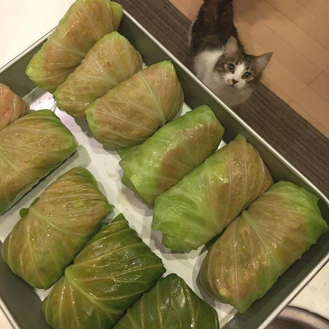 . 今日はね、初めてロールキャベツ作ってみたよ。 料理は苦手〜😂😂 今日は#豆乳スープのロールキャベツ にしまーす💓 . #CAT#cats#catstagram#instacat#neko#neco#ノルウェージャンフォレストキャット#NorwegianForestCat#猫#にゃんだふるらいふ#長毛種#毛長#ハチワレ#愛猫#猫バカ#ねこ部#猫ら部#ふわもこ部#耳毛部#激ま部#こむぎ#お口まわり玉ねぎ隊#ロールキャベツ