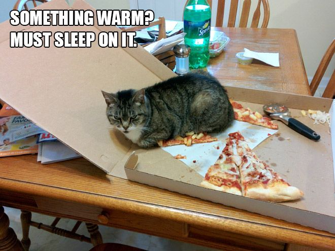 Best Funny Things Which Have Made Me Laugh Out Very Loud - Hilarious cat owners struggles