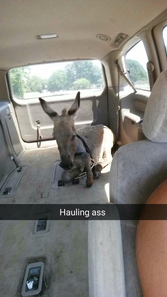 150 Of The Most Funniest Animal Snapchats Ever!