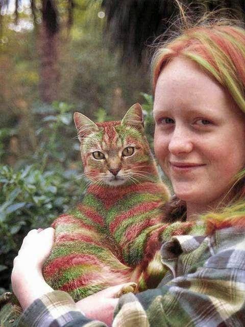Pisici - fashion!?