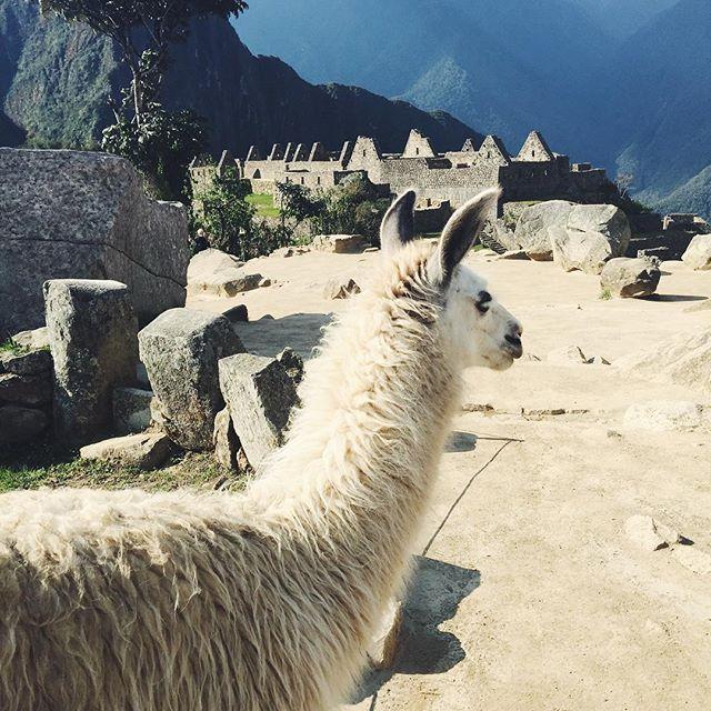 Peru Travel Tips Common Peruvian Phrases For Travel: Best 25+ Peru Llama Ideas On Pinterest