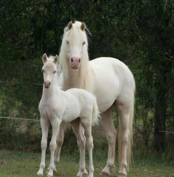 Rare Albino Horses 130 best images about ...