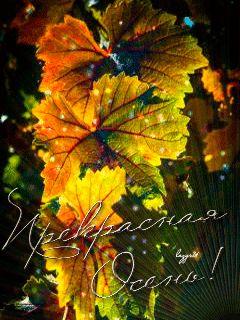 Осенние листья - анимация на телефон №1281589