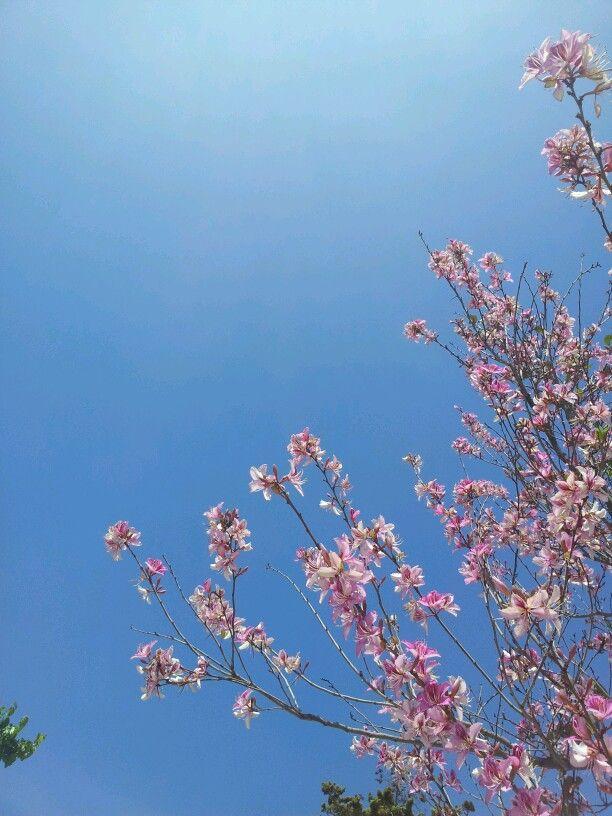 Spain. Flowers & blue sky