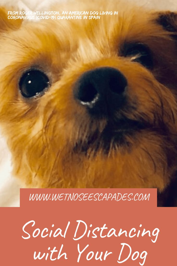 Pin On Best Of Dog Travel Dog Care Wet Nose Escapades