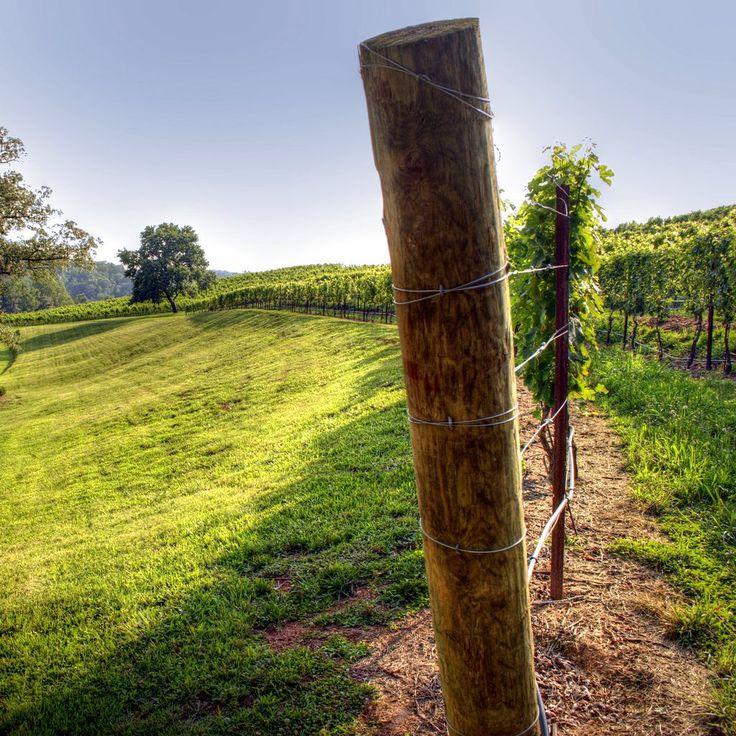 Шпалеры для винограда легко сделать своими руками