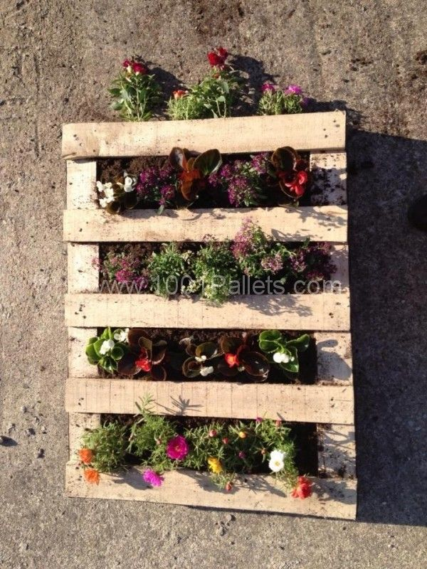 Since we often have the question, here is an easy way to prepare a pallet planter :  1.  be sure your pallet is clean and ready  2.  we suggest to use non woven paper as in the pic to be sure the soil will be kept in. 3.  arrange your flowers/vegetables, etc, and depending on the side you plant them, let them root  on the floor for several days (picture) ! That's it, your vertical pallet is ready, just hang it!