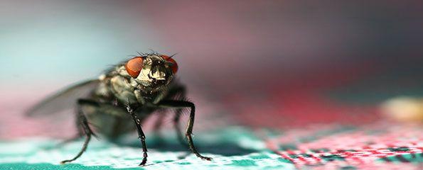- ASTUCES POUR CHASSER LES MOUCHES - Dès que l'été se pointe, les mouches aussi ! Voici une astuce qui permettra de s'en débarrasser sans polluer votre environnement. La suite : http://www.astussima.com/chasser-les-mouches.html