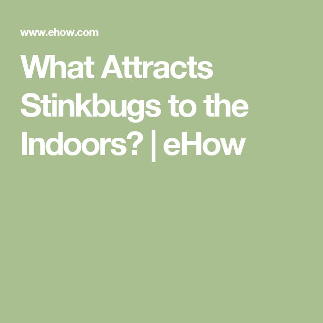 What Attracts Stinkbugs to the Indoors? | eHow
