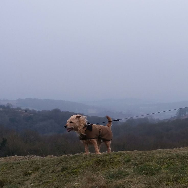 Archie enjoying the Malvern Hills while holidaying with his owners at The Annex Orchard Side B&B