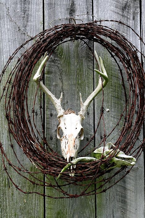 Hunters Wreath Variation Photograph  - Hunters Wreath Variation Fine Art Print