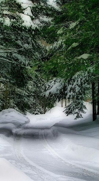 Snowy evergreen trail in rural Vermont • photo: Deborah Benoit on RedBubble