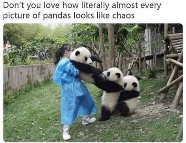Panda Chaos Animals In 2020 Cute Baby Animals Cute Animal