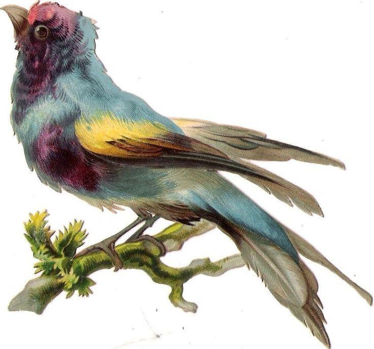 Oblaten Glanzbild scrap die cut chromo Vogel 13,5 cm  bird oiseau Ast branch: