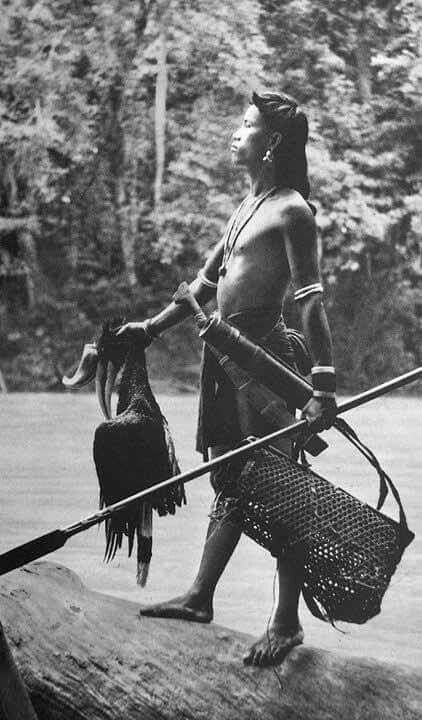 Borneo is the 3rd largest island in the world. The indegenous tribes are called Dayaks. There are over 250 tribes of Dayaks in Borneo.