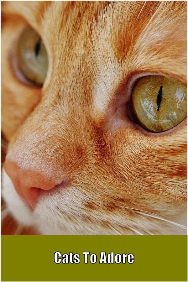 Cat care A cat's conduct is definitely a