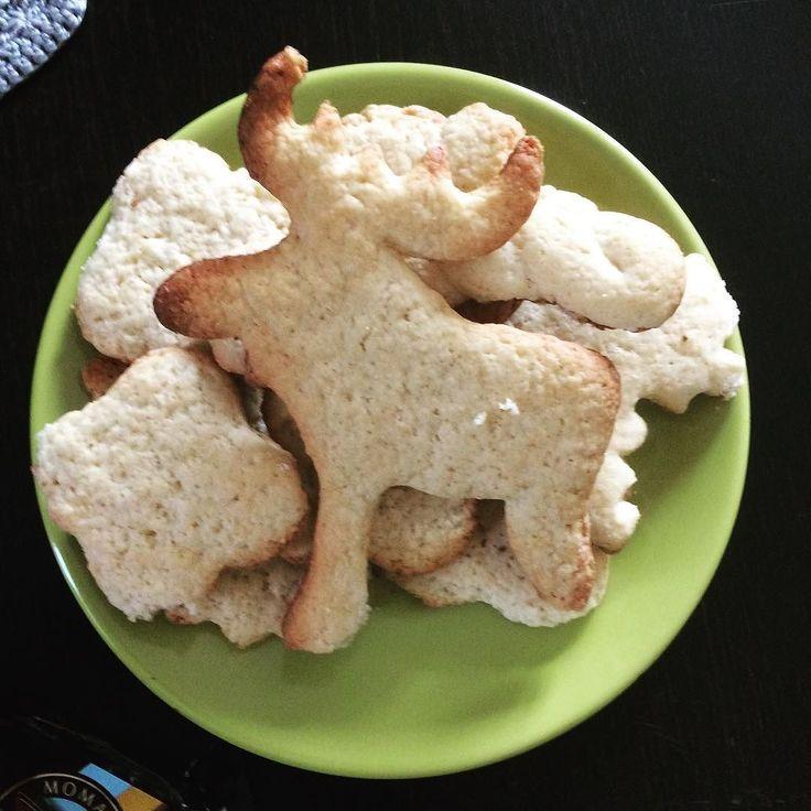 Mama upiekła mi ciasteczka - łoś jest bardzo jednoznaczny :x #choranóżka #łośkuternoga #maminyhumor #całeżyciepodmostem #trollsfamily