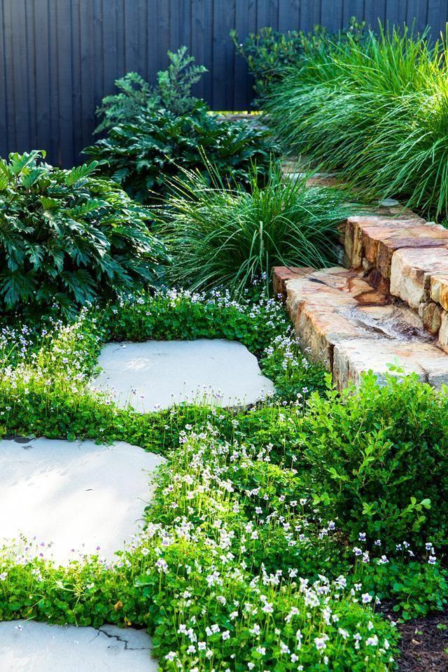 Native Violet Viola Hederacea Creates A Pretty Groundcover Beside Bluestone Stepping Stones In This Cleverly Desig Sloped Garden Cottage Garden Garden Design
