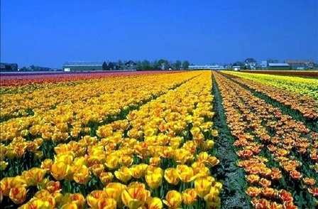 Leiden, Holland Tulip City