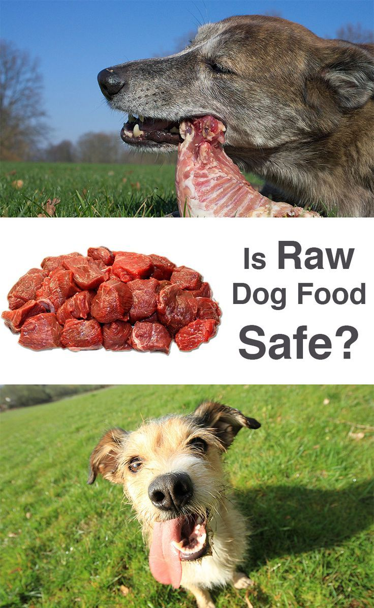 Raw Meat For Dogs Is It Safe Raw Feeding For Dogs Dogs Puppy Food
