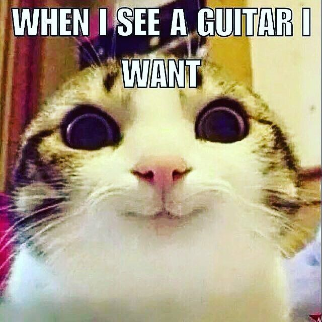 Yep that about sums it up ;) - www.Guitaristica.org – . – more on http://Guitaristica.org #acousticguitar #guitars #guitaristica