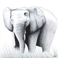 Elephant  Artwork by Briony Nolan www.brionynolan.com