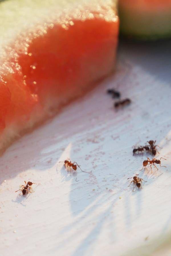Das Sind Die 10 Effektivsten Hausmittel Gegen Ameisen
