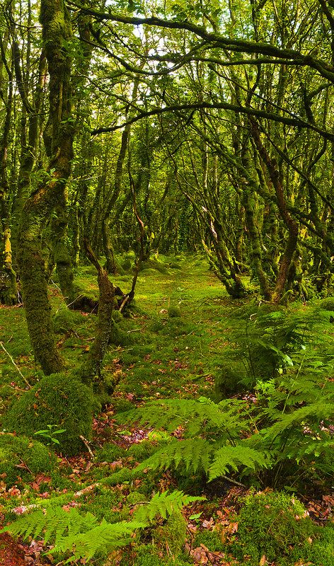 Une allée de mousse dans la forêt près de Locronan dans le Finistère. <3