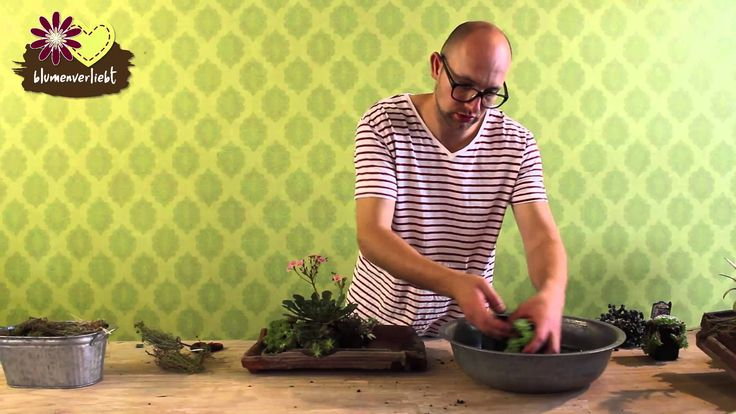 Ber ideen zu dachwurz auf pinterest sempervivum for Basteltipps gartendeko