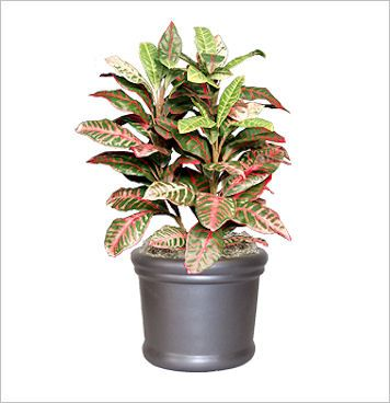 Croton replica office plant for indoor use