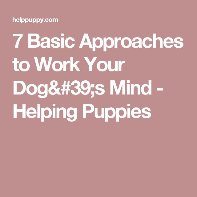 7 Basic Approaches to Work Your Dog's Mind - Helping Puppies