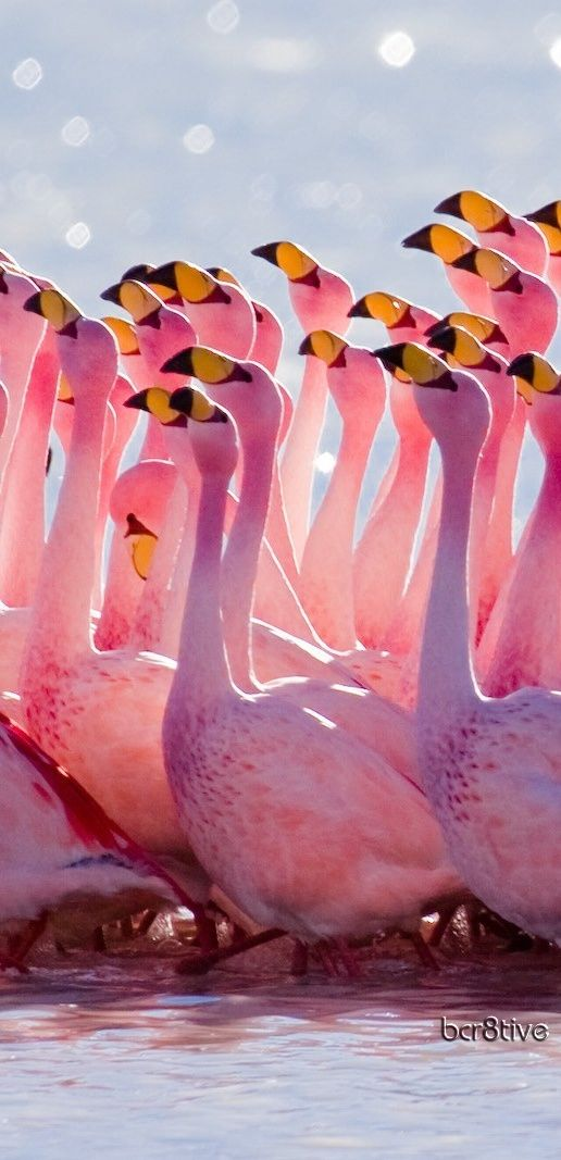 THE MATING SEASON by SUZIE Q Pink bird nature