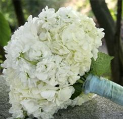Bridesmaid bouquets: white hydrangeas