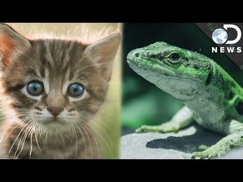 Warm-Blooded vs. Cold-Blooded: What's The Difference? Some animals are warm-blooded, while others are cold-blooded. What sets them apart, and what advantages does each kind have over the other? Read More:Animal Body Types - Basics Dinosaurs neither warm-blooded nor cold-blooded What Is a Cold Blooded Animal? What Is the Difference between Warm-Blooded and Cold-Blooded Animals? By: DNews.