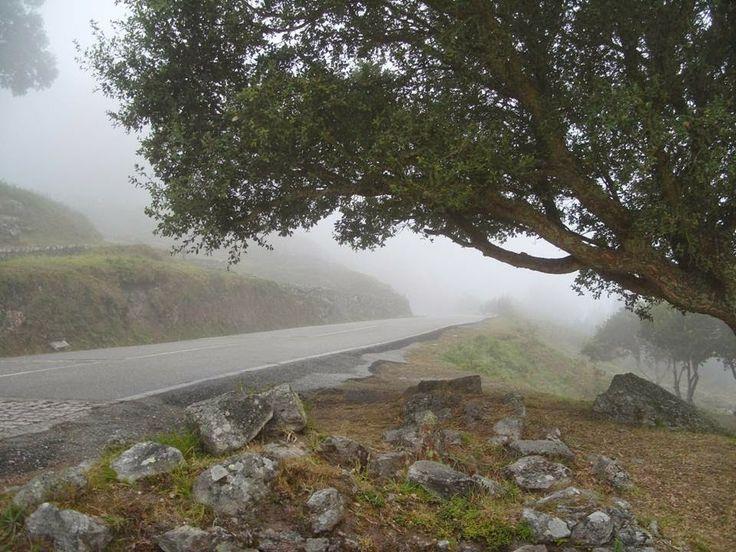 LA LECHUZA LITERARIA: Los placeres de la vida