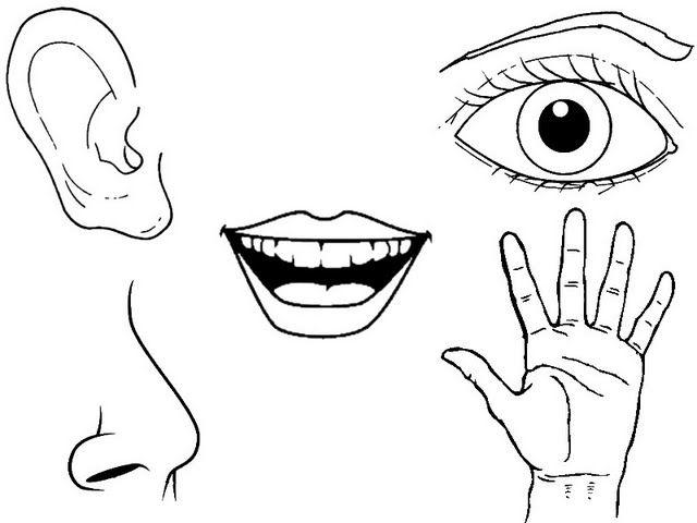 dibujos sentidos para colorear  Cerca amb Google  P3  Pinterest