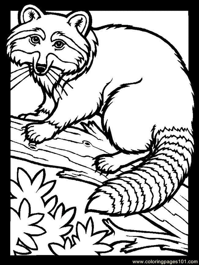 16 best VBS images on Pinterest Coloring books, Coloring pages and - best of coloring pages to print animals