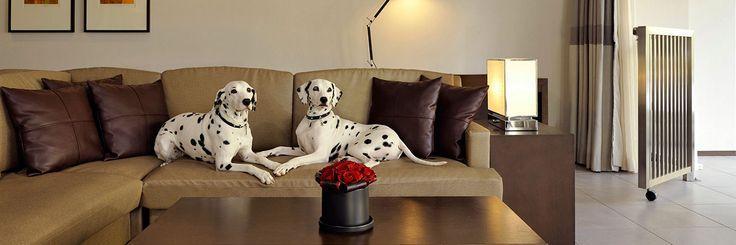 ホテル内のドッグ フレンドリールーム(ペットと泊まれる客室) |ハイアット リージェンシー 箱根 リゾート&スパ