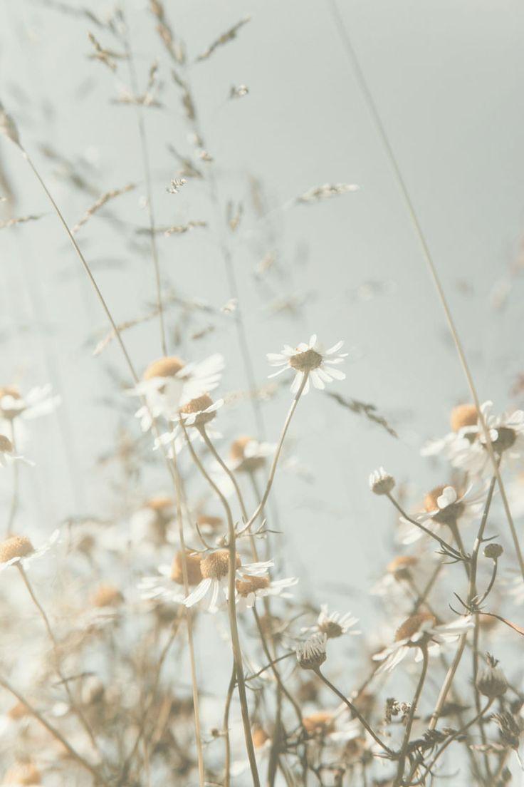 blog.alaViky.de – photography journal » a dreamy creamy field