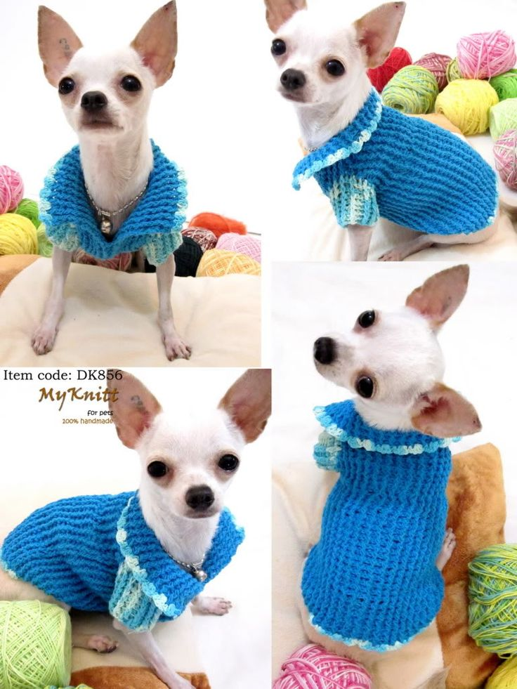 53 best Perros images on Pinterest   Dog clothing, Little dogs and Pets