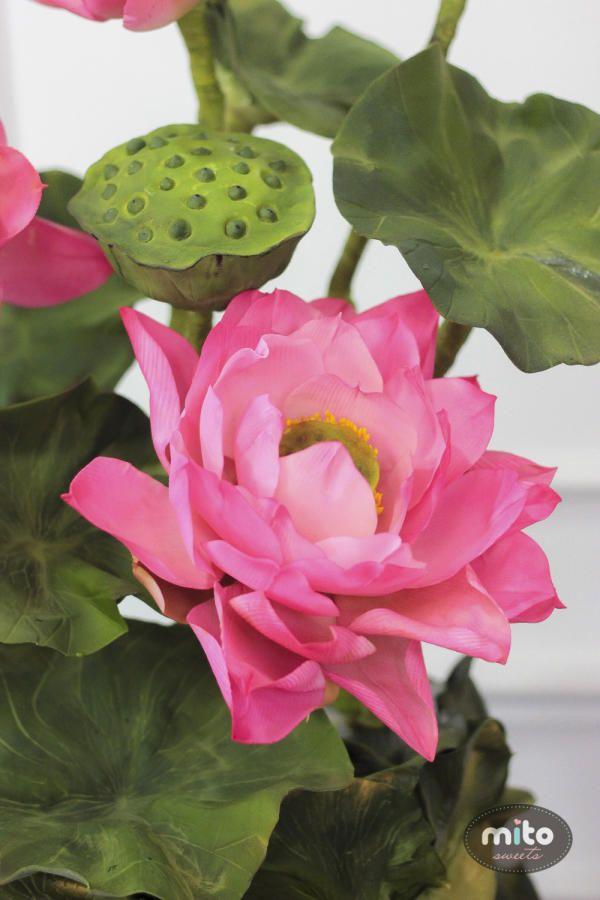 Sugar Lotus .  by Mito Sweets